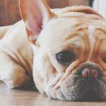 【心理テスト】犬が悲しい顔をしている理由は? 答えでわかる恋人の欠点